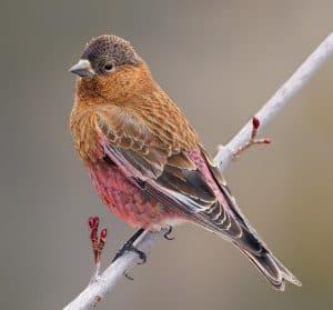 specialty bird
