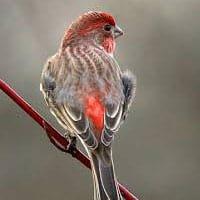 She Flew Birding Tours photo