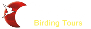 She Flew Birding Tours