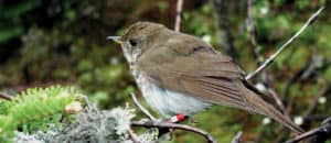 Maine and New Hampshire with She Flew Birding Tours