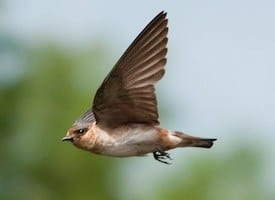 Florida with She Flew Birding Tours