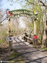 Magee Marsh with She Flew Birding Tours on our Warbler Grand Tour.